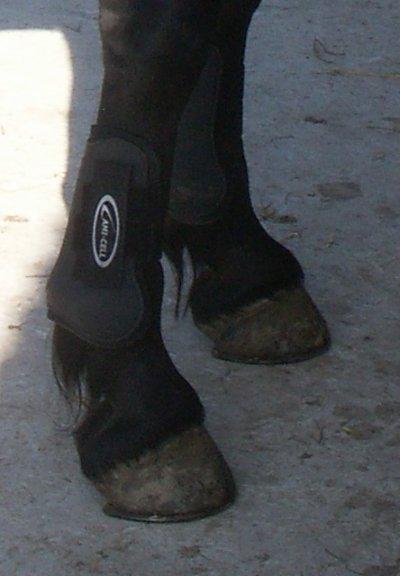 guetres Lamicell noir taille poney excellent etat!mis quelques fois