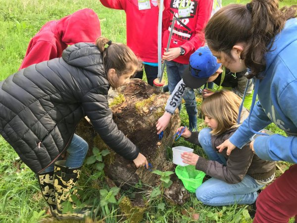 23/04 : premier jour du stage nature.  Les différents groupes d'enfants sont partis en repérage dans la forêt de Beloeil.