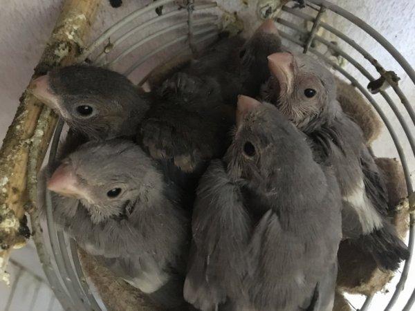 Nest van 5 jongen/ Nid de 5 jeunes