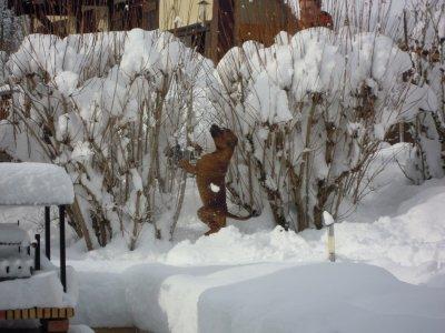 Première neige de Gunner