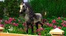 Photo de Beauty-Photographie-Sims