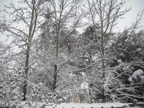 Mardi 20 Fevrier 2015 le TRYKE ne va sortir aujourd'hui,il neige