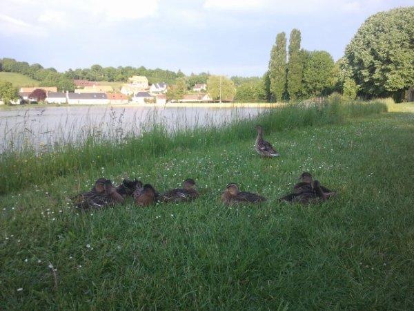 Fete des maman multiplier par 9