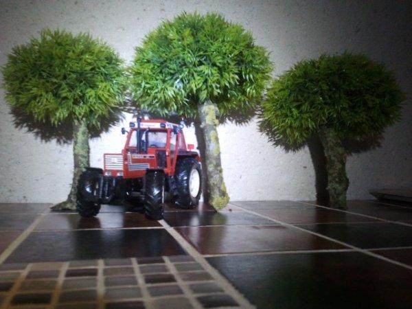 Mes arbre ???