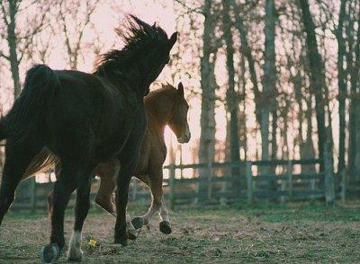 le cheval sa se mange pas!!!