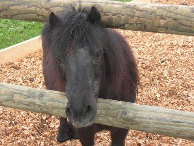 un cheval ...