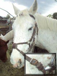 ~ Filet muserolles croisée taille poney ~