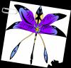 Orchidée arkaptéron
