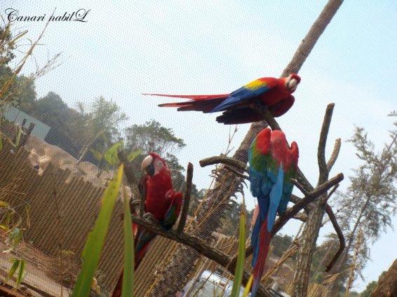 des Aras au Zoo