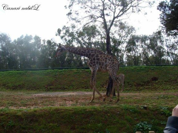 Park zoologique !