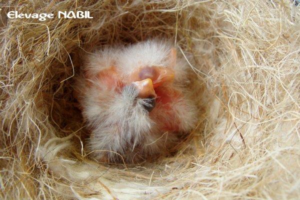 les premières naissances :D