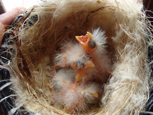 3 jeunes malinois :D
