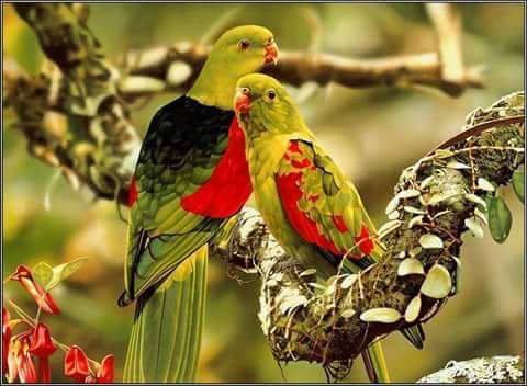 ليتنا مثل الطيور إن ضاقت بنا الأرض والبلاد  حلقنا في سماء بلاد اخرى