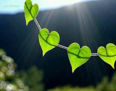 """""""Les coeurs sont des fermes ... où le mot est bon, s'il ne jouit pas de ses fruits, appréciez ses légumes"""""""