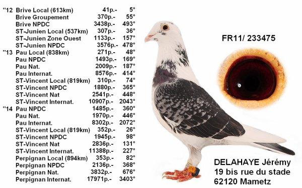 palmarès de mon meilleur pigeon !!!