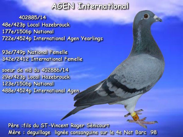 Agen résultat local + National + International