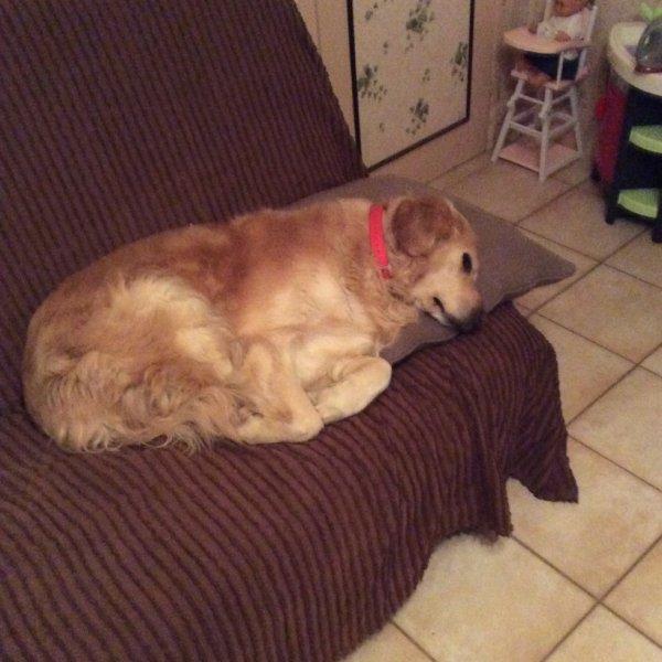 Petite sieste avant d'aller bosser