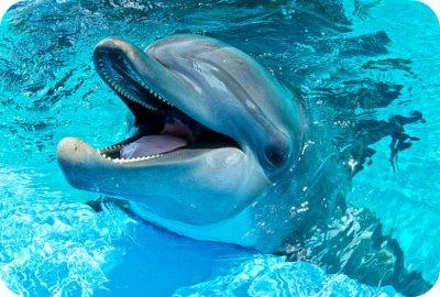 Top 10 des bonnes raisons de tabasser un dauphin