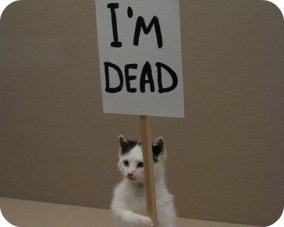 Top 10 des bonnes raisons de vouloir être réincarné en chat
