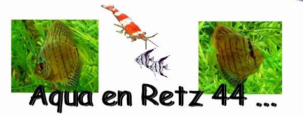 Club Aquariophilie des Pays de Retz 44