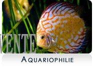 Mes vente dans l'Aquariophilie