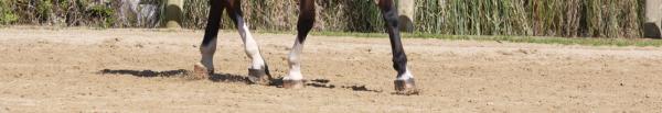 Dressage : Mon cheval ne tient pas en place