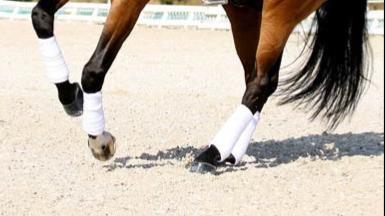 Question : Mon cheval ne s'incurve pas et je n'arrive pas a trotter et galoper assis, que faire ?