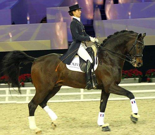 Dressage : Comment mettre en place mon cheval ?
