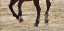 Photo de conseils-equitation2