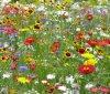 Les prairies et les champs fleuries