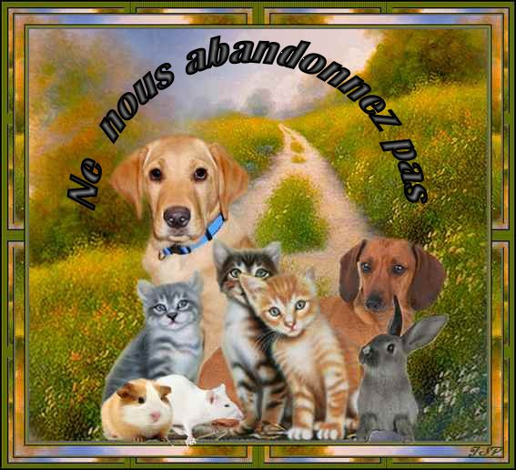 demain  !!!!  11 AOÛT 2011   WOUAF    DE LA  PART DE BINGO