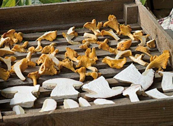 Méthodes de conservation des champignons