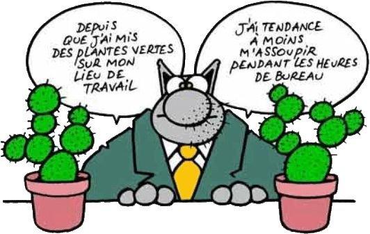 Le chat francophone. Rencontres pour une nuit.
