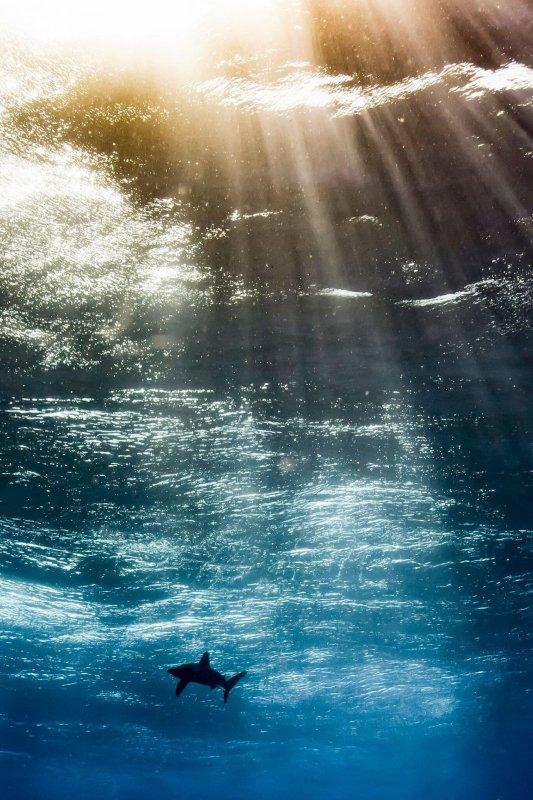 Meilleur Photographe Sous-marin de l'Année 2017 ...