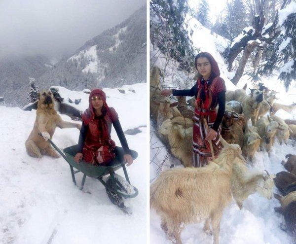 Une bergère de 11 ans et son chien sauvent des chèvres !