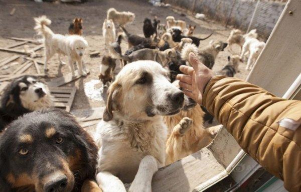 Un millionnaire rachète un abattoir et sauve 2000 chiens de la mort