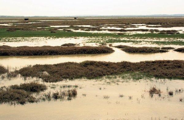 Baie de Somme, Hauts-de-France
