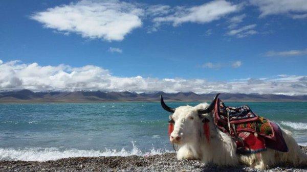 Balade Au Tibet ...