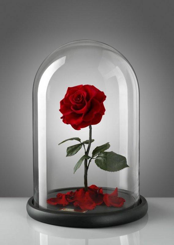 """ROSES Immortelles ... """" la Belle et la Bête """"   Tinaa   tu va aimer"""