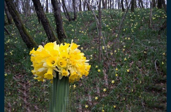 Pourquoi le printemps tombe ce 20 mars ?