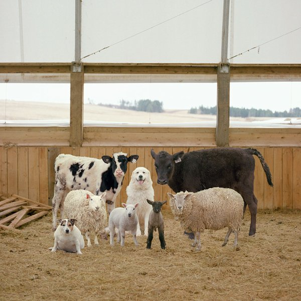 Les animaux de la ferme ... Photos de Rob MacInnis !