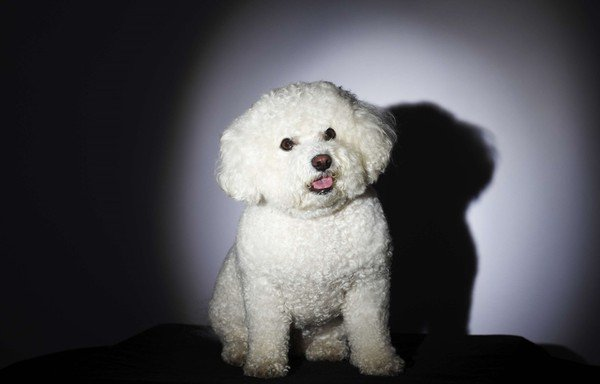 Disparu il y a 11 ans, le chien retrouvé en Lorraine ...