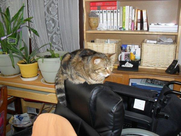 petite histoire  d'un chat