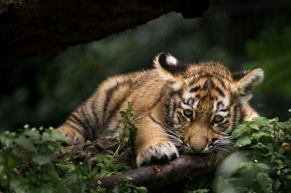 Photographe Animalier ... Loup Ademeit !