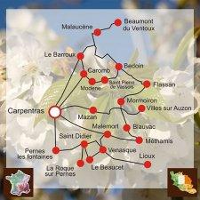 Cerises des Monts de Venasque (Vaucluse)