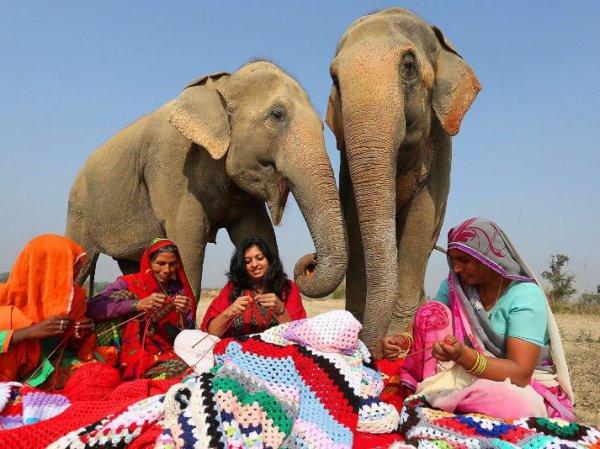 Inde : un village tricote pour les éléphants !