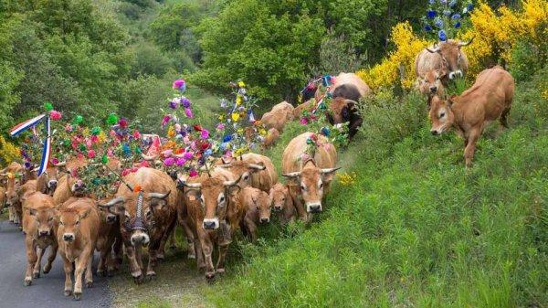 Fête de la transhumance en Lozère, Occitanie