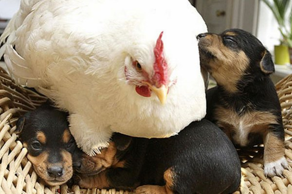 L'entraide existe vraiment ... chez les animaux !