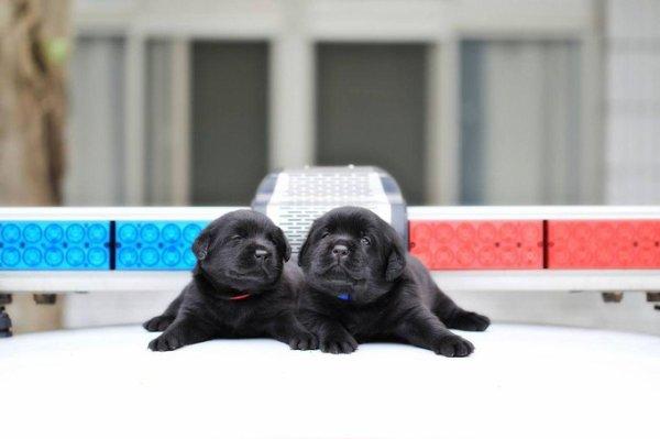 Voici les Policiers les plus mignons de ... la Planète !