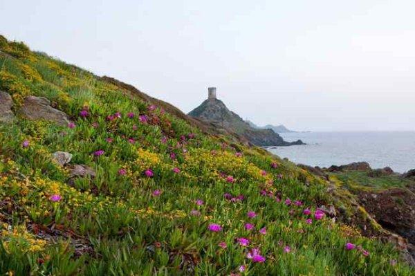 Des lieux incontournables à visiter en Corse